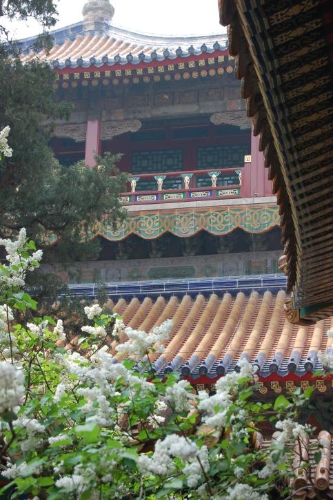chinese spring